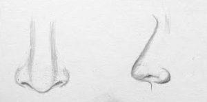 nose drawing